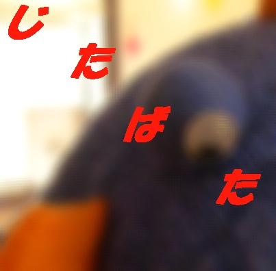 b0067012_17311310.jpg