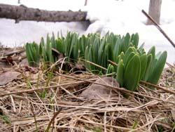 春、見っけ!_f0096216_2123427.jpg