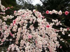 春の奈良_f0129726_2026549.jpg