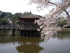 春の奈良_f0129726_203517100.jpg