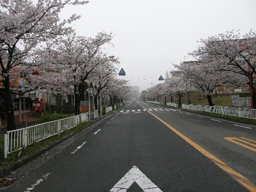 レオの散歩 花見編_f0128542_23394621.jpg