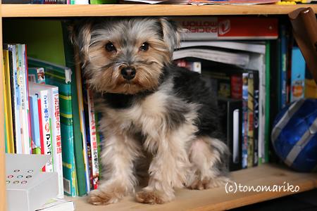 本棚でおひるね zzz_c0024345_9312234.jpg