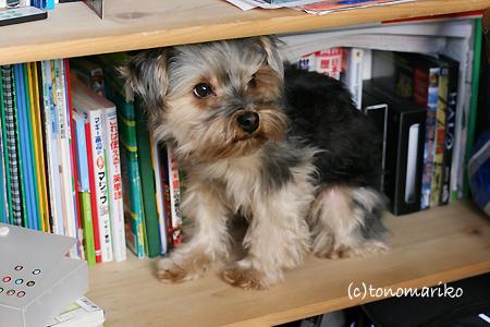 本棚でおひるね zzz_c0024345_9315052.jpg