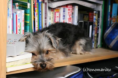 本棚でおひるね zzz_c0024345_9322158.jpg
