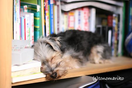 本棚でおひるね zzz_c0024345_932448.jpg