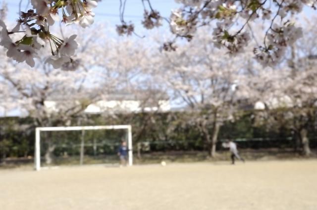 桜満開の木に囲まれた小さな公園のサッカー場。ゴールもあり、小学生が数人サッカーやっていました。