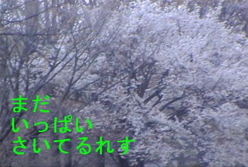 f0123589_1716276.jpg