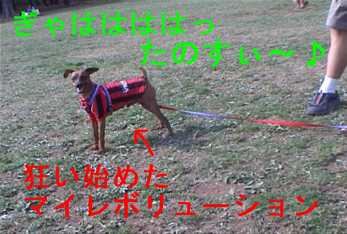 f0123589_17354662.jpg