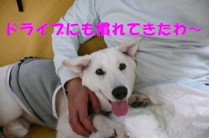 f0121712_1223365.jpg