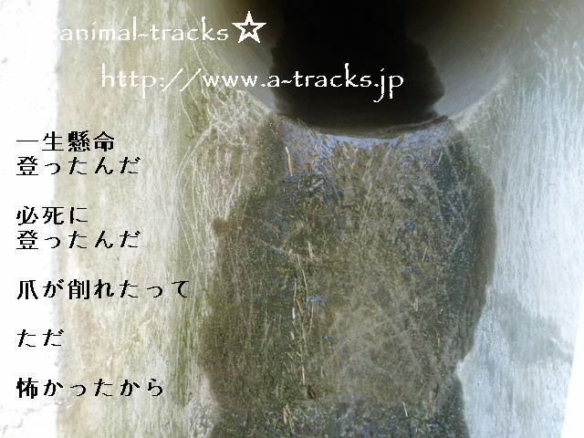 d0035420_091941.jpg