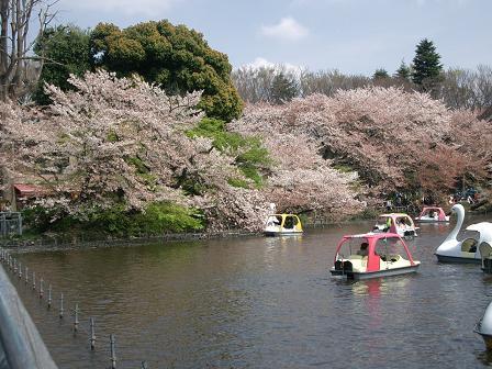 井の頭公園・名残の桜~_c0079828_14364152.jpg