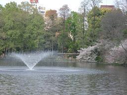 井の頭公園・名残の桜~_c0079828_1514656.jpg