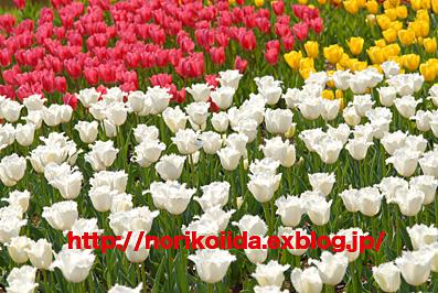 d0086230_703053.jpg