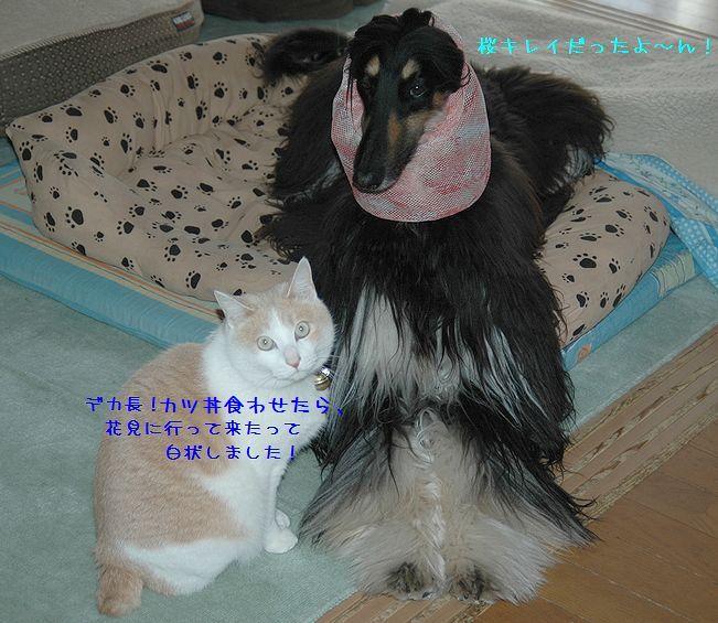 c0059331_2564798.jpg