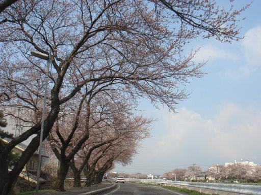 桜になる日_a0014840_22303541.jpg