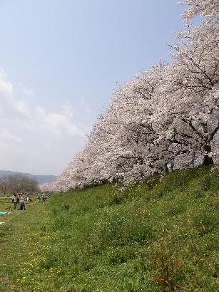 花見の続きです_f0128542_0592969.jpg