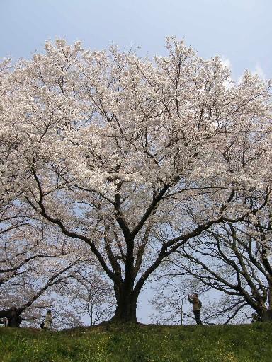 花見の続きです_f0128542_124094.jpg