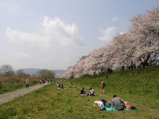花見の続きです_f0128542_142292.jpg