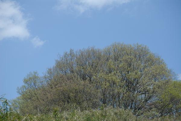 春は_b0036743_21441188.jpg