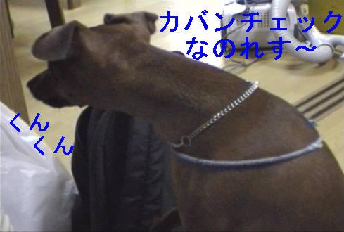 f0123589_1501790.jpg