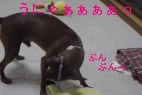 f0123589_1518744.jpg