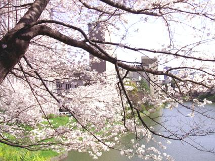 07 千鳥が淵の桜_d0003401_10573434.jpg