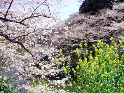 07 千鳥が淵の桜_d0003401_10581227.jpg