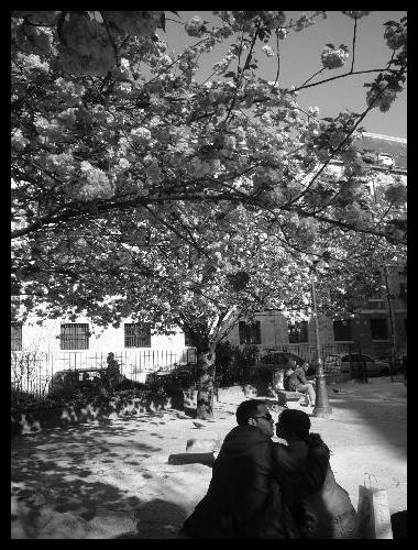 ■桜と恋人たち(パリ)_a0008105_1744172.jpg