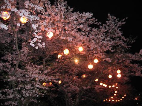 花見に来んかよ_e0101917_19534792.jpg