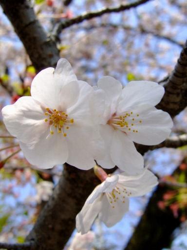 引いた風景写真から花のマクロ撮影まで!シーン別にコンパクトカメラで撮るポイント