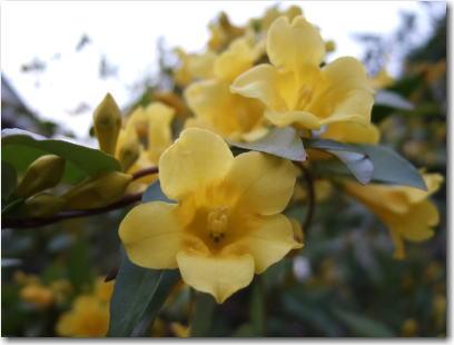 4月10日黄色い花