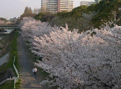今週もお花見はまだまだ続く~_b0025947_20214324.jpg