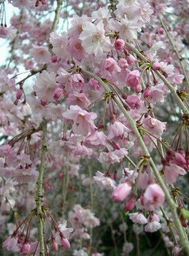 今週もお花見はまだまだ続く~_b0025947_2025649.jpg