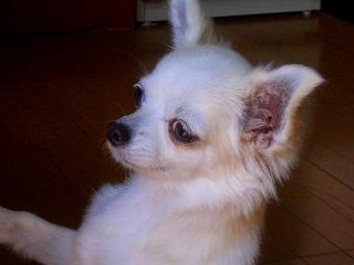 愛犬「はな」_c0087349_17182389.jpg