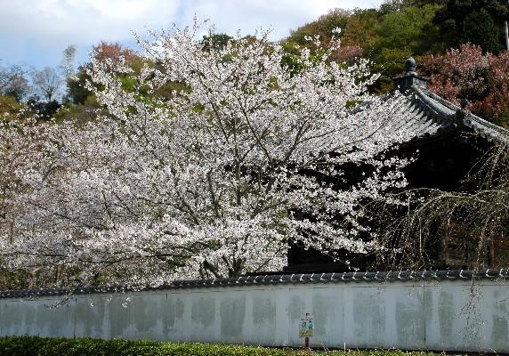 花のある風景_b0093754_0304287.jpg