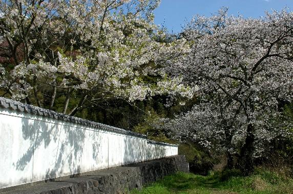 花のある風景_b0093754_0305392.jpg