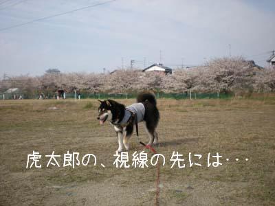 f0118956_1485880.jpg