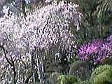 高尾山の春_b0096957_22202116.jpg