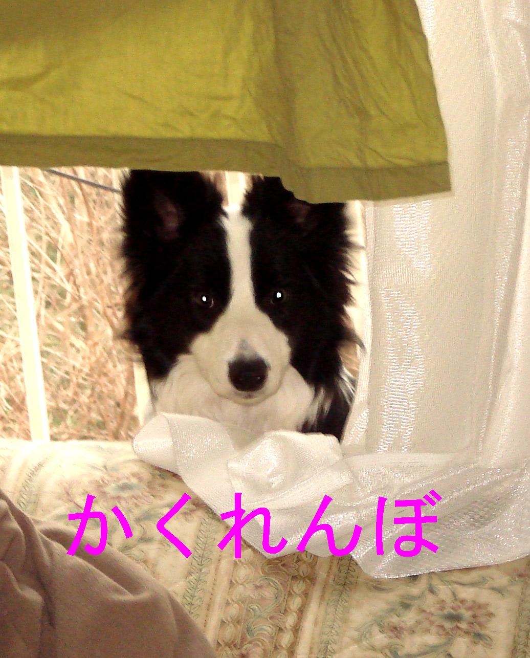 f0132070_0564979.jpg