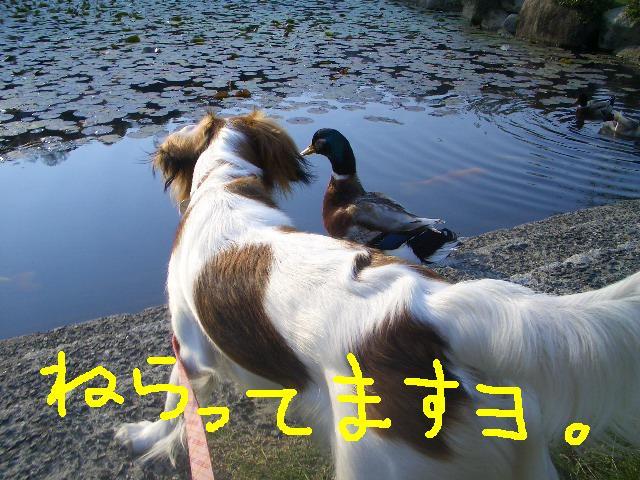 f0126278_031533.jpg
