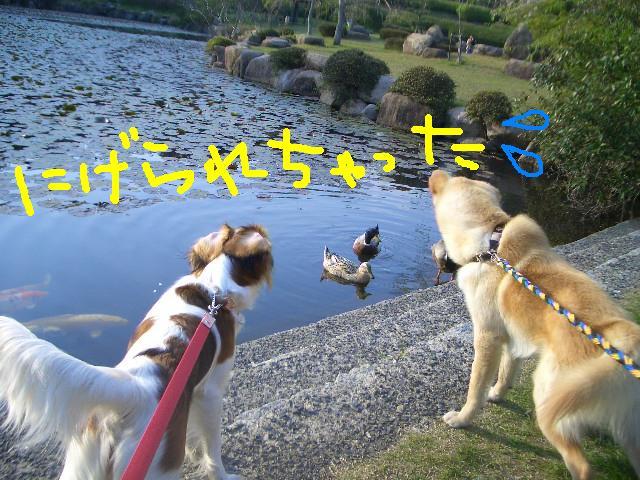 f0126278_0362422.jpg