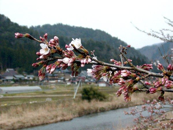 美山の春_c0057390_22291093.jpg