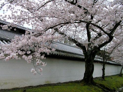 京都醍醐寺_e0048413_22333692.jpg