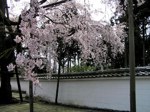京都醍醐寺_e0048413_22335242.jpg