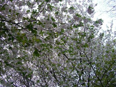 駒場も、お花が見頃です。_a0026127_10435069.jpg