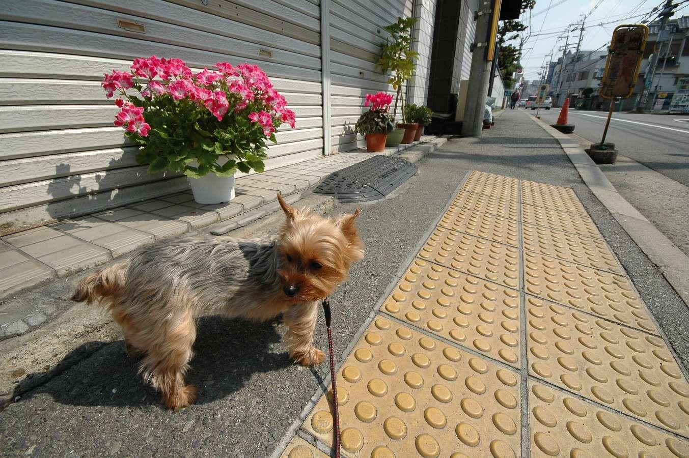 コムギと散歩_b0069128_23334639.jpg