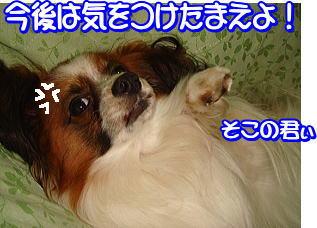 f0011845_0312278.jpg