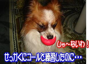 f0011845_0315989.jpg