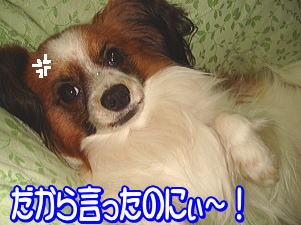 f0011845_0392194.jpg