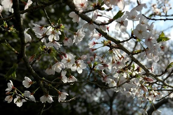 花のある風景_b0093754_046348.jpg